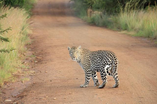 Jhalana Leopard Reserve   Jaipur Tourist Place   Jaipur Places to visit