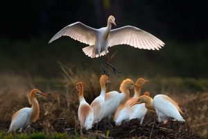Keoladeo National Park | Bharatpur Bird Sanctuary | Keoladeo Travel Guide