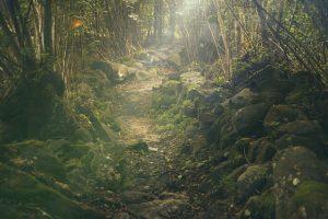 Kumbhalgarh Wildlife Sanctuary 2021 | Kumbhalgarh | Rajasthan Tourism
