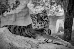 Ranthambore National Park 2021   Ranthambore Tiger Reserve