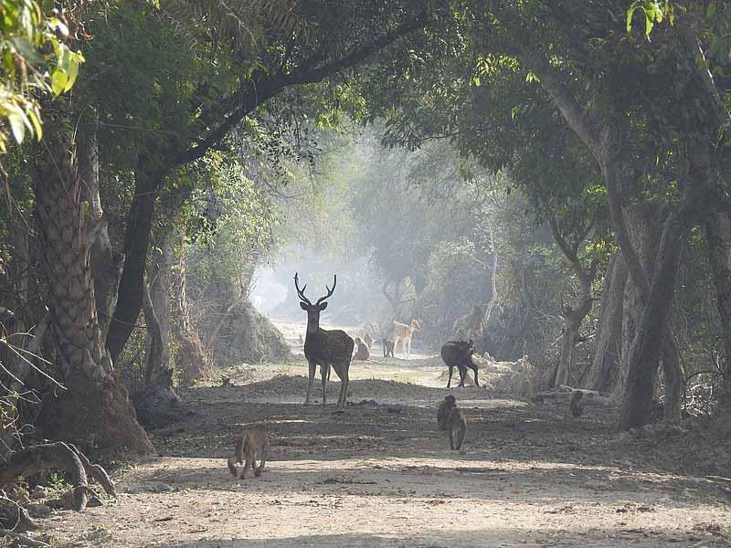 Deer-in-Bharatpur-Bird-Sanctury