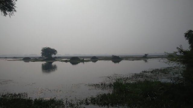 Morning-view-from-keoladeo-bird-sanctury