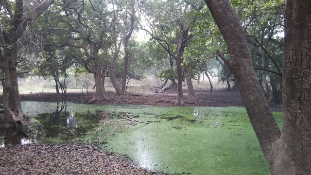 vegitation-of-keoladeo-national-park