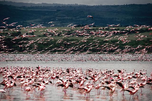 Chilika Lake | Chilika Bird Sanctuary | Chilika Wildlife Sanctuary